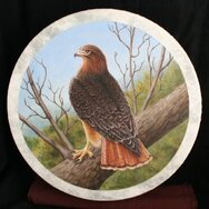 RED TAIL HAWK DRUM ------SOLD------