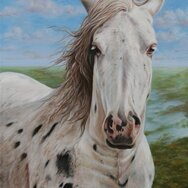 APPALOOSA PORTRAIT -----SOLD-----