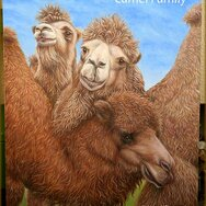 Camel Family - the Joy of Relationship